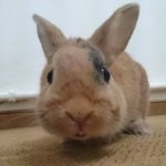 hlídání králíka Praha