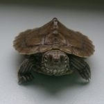 hlídání želv Praha