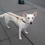 výcvik psů v Praze