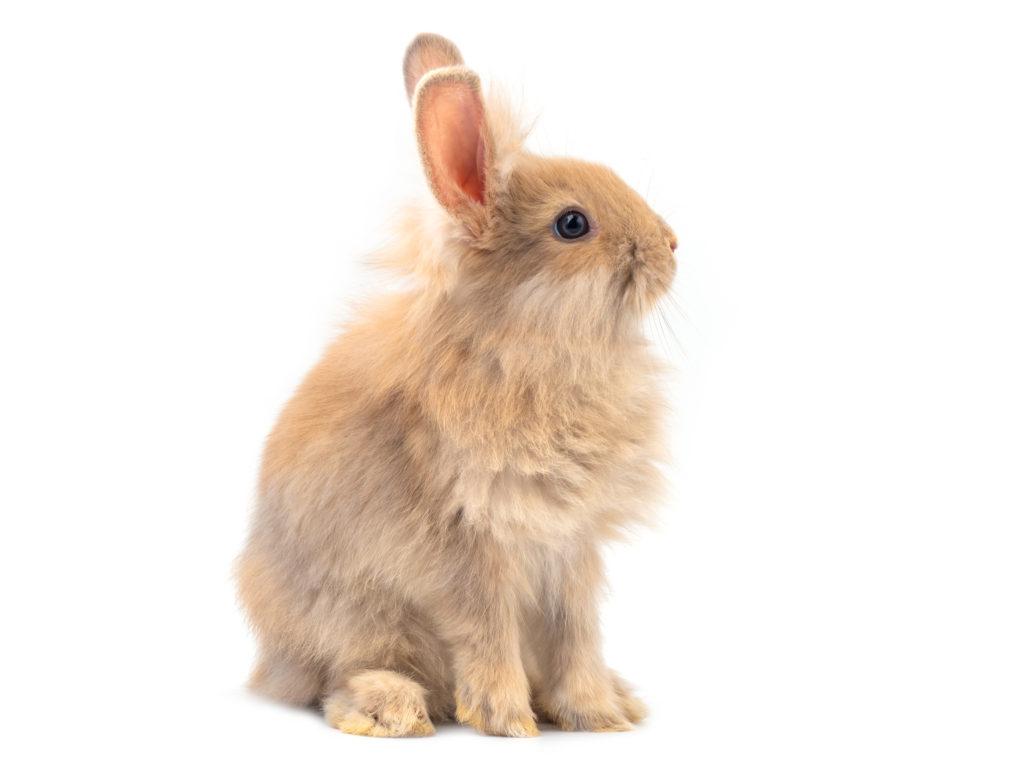 stříhání drápků králíka, stříhání drápků králíčka