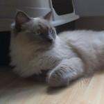 hlídání koček v Praze