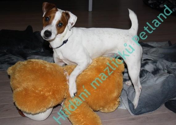 hlídání a venčení psů Praha
