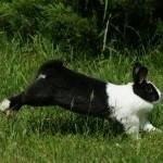 hlídání králíčků