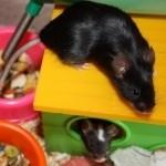 myšky a jejich myšata