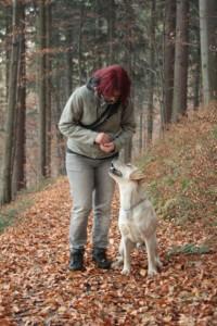 hlídání psů v Praze