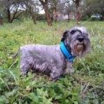 hlídání psa v Praze