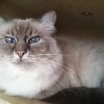 hlídání kočiček Praha