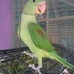 hlídání papoušků Praha