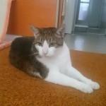 hlídání koček Praha