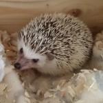 hlídání ježků Praha