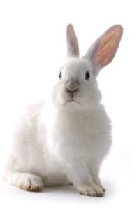 hlídání králíků v Praze