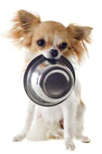 výživa psa, výživové poradenství psů