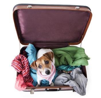 cestování se zvířaty do zahraničí