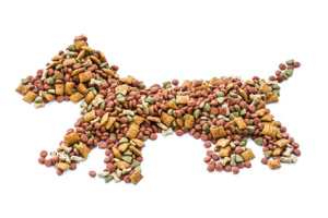 výživa psa, výživové poradenství psů, krmení psa