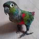hlídání papoušků v Praze