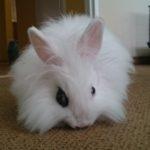 hlídání králíčků Praha, hotel pro králíky