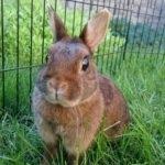 hlídání králíčka v Praze