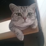 hlídání kočky Praha