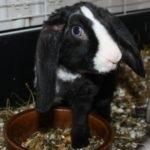 hlídání králíka v Praze