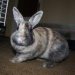 hotel pro králíka v Praze