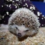 hlídání ježka Praha