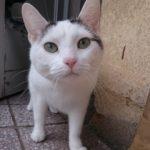 hlídání kočky v Praze