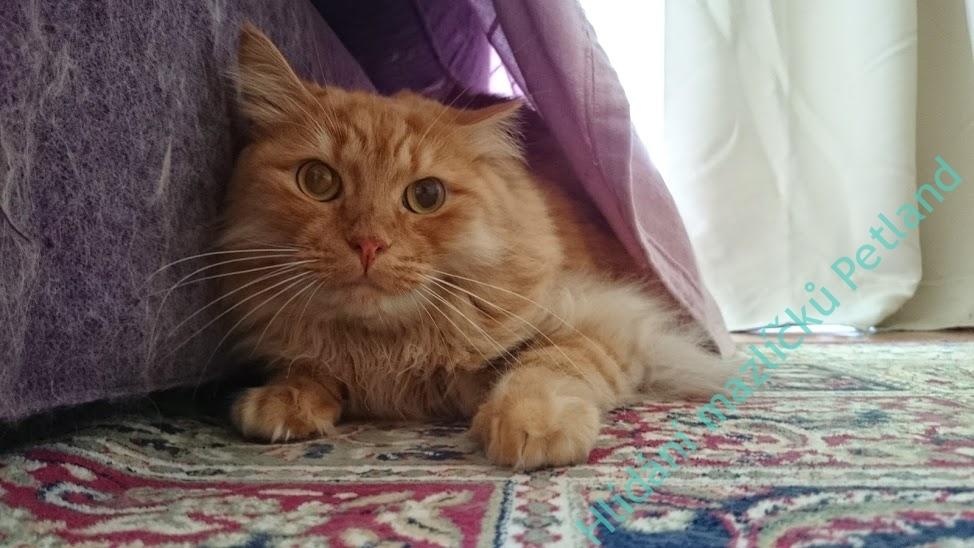 hlídání koček