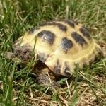 hlídání želvy Praha