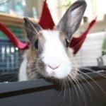 hotel pro králíky v Praze