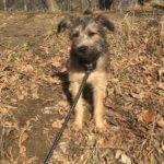 hlídání psa Praha