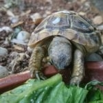 hlídání želvy v Praze