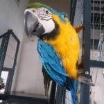 hlídání papouška v Praze