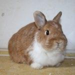 hlídání králíčků v Praze
