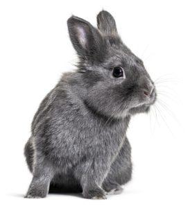 očkování králíka